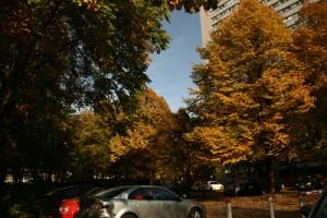 Parkplatz mit Baumbestand im Herbst